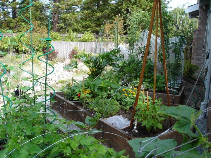 sustainable danville area farm circle san ramon backyard