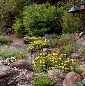 EBMUD drought tolerant garden